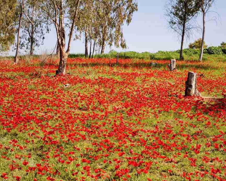 דרום אדום, ישראל. צילום: סהר קרט