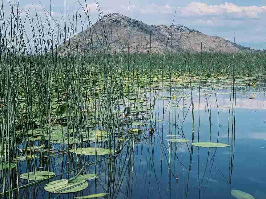 מונטנגרו - אגם סקאדר