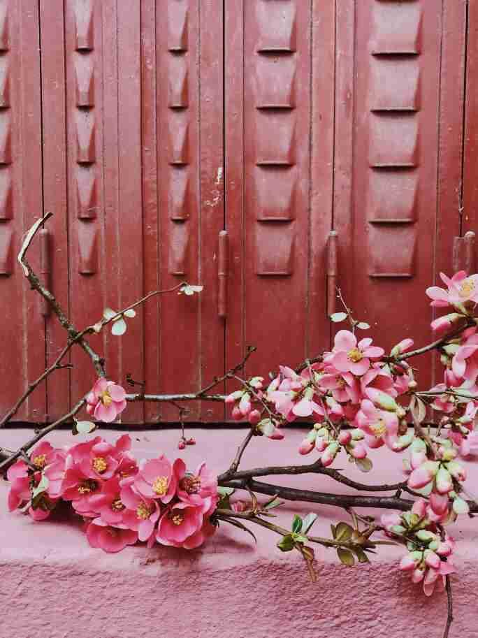 חופשה בצרפת - פרחים