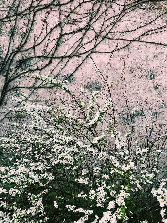 פרחים בצרפת