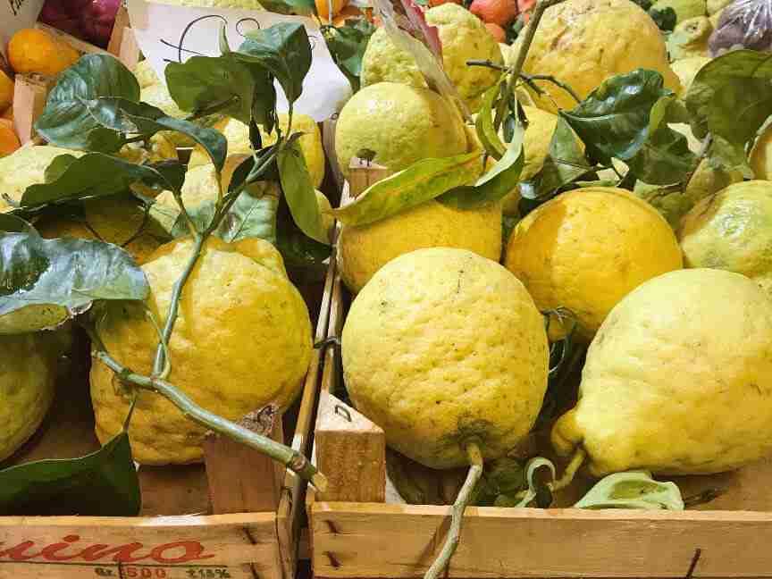 לימונים בסורנטו, דרום איטליה