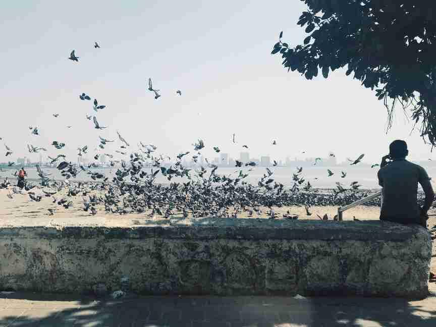 הטיילת שלאורך הים הערבי במומבאי