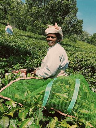 צבעוניות עירונית - שדות התה במונאר
