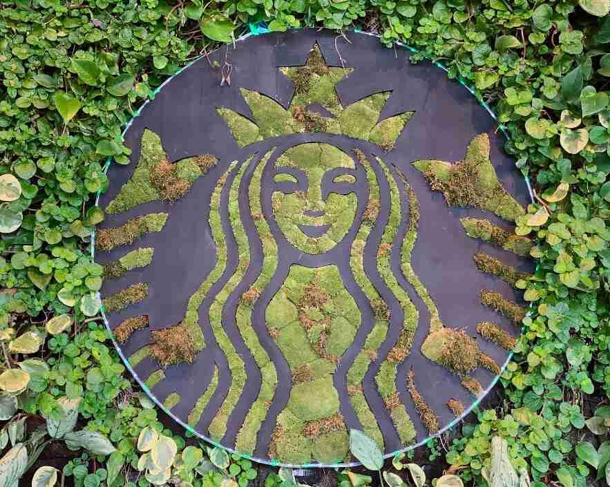 סטארבקס כוס קפה בקוסטה ריקה