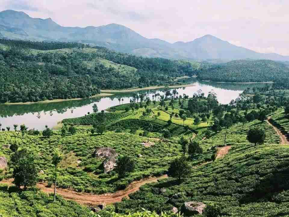 מטעי התה במונאר הודו